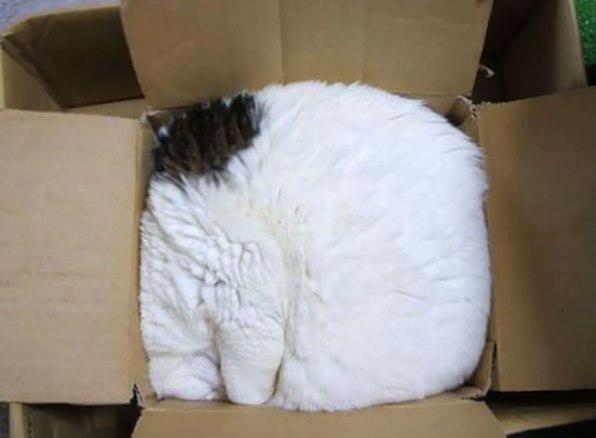 Kaķisrar Autors: Ciema Sensejs 20+ kadri, kuri pierāda, ka kaķi var gulēt pilnīgi visur