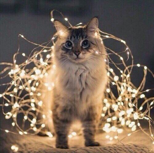 Autors: Fosilija Pusnakts sarunas ar kaķi #2