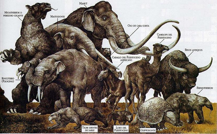 Kāpēc izmira megafaunaPirms 10... Autors: Lestets Ko zinātnieki nevar izskaidrot?