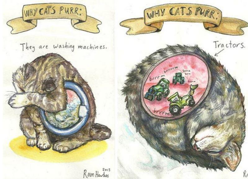 Tā ir ļoti ierasta skaņa kaķim... Autors: Lestets Kāpēc kaķi murrā?