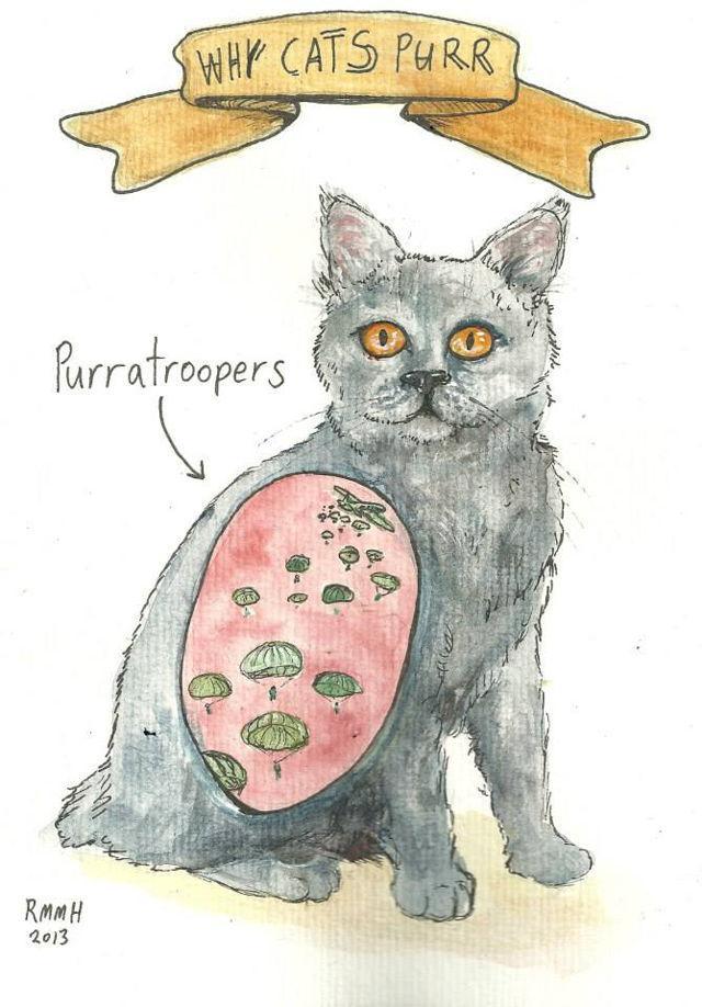 Tas īsti nav skaidrs kāpēc... Autors: Lestets Kāpēc kaķi murrā?