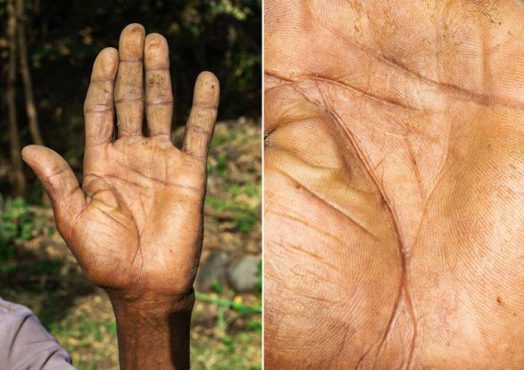 Dārzkopis Autors: matilde Fotogrāfs, kurš atrāda dažādu cilvēku profesijas caur viņu rokām