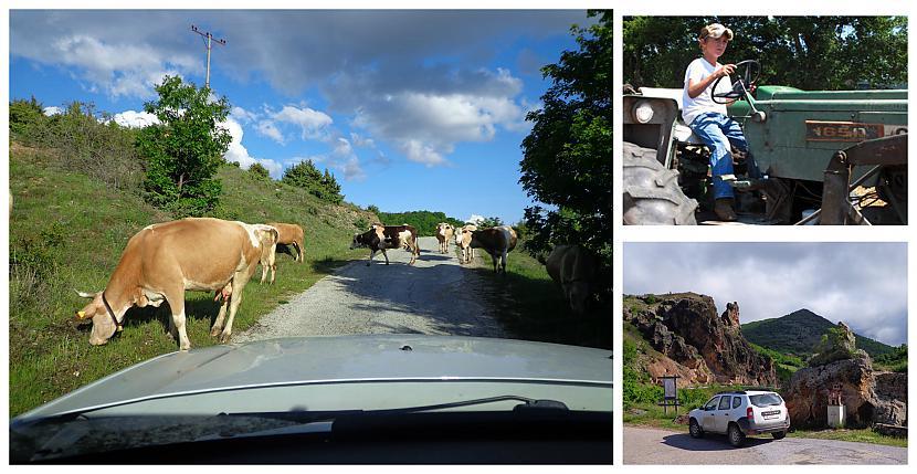 Govis un aitas ganu pavadībā... Autors: Pēteris Vēciņš Kratovas Stevče un noslēpumainie Maķedonijas ziemeļaustrumi (Maķedonija: 7.daļa)