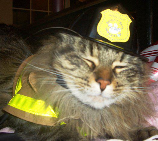 Kaķi ir glābuši cilvēkus... Autors: Fosilija Interesantu faktu paka par KAĶIEM