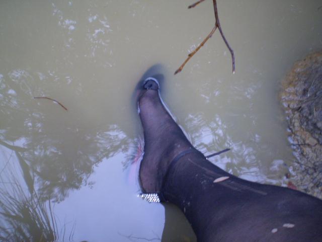 """Wet Rose Autors: Fosilija """"Lietus sandales"""": latvietes, kuras dara..."""