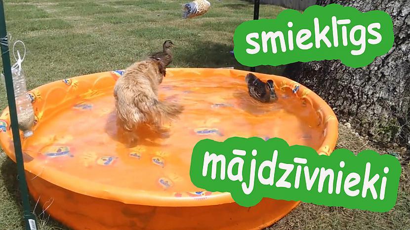 Autors: cocosik@ru Smieklīgi mājdzīvnieki