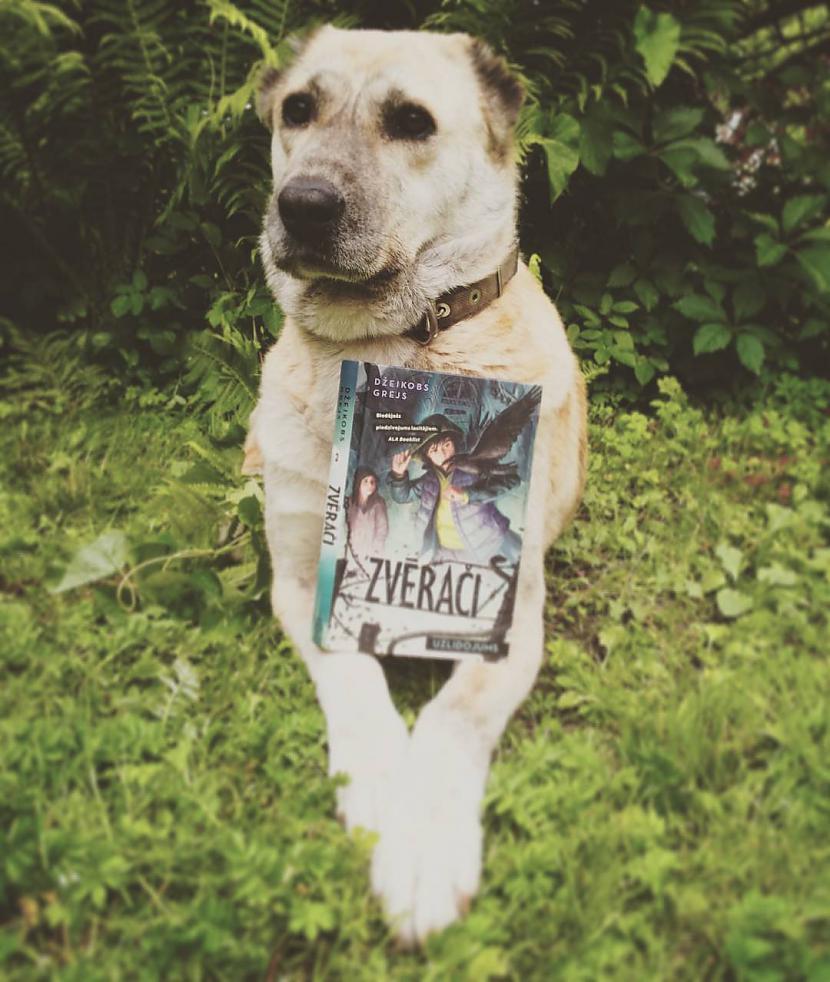 Autors: Zelta Pūcīte Interesanti smieklīgi un mīlīgi suņa foto