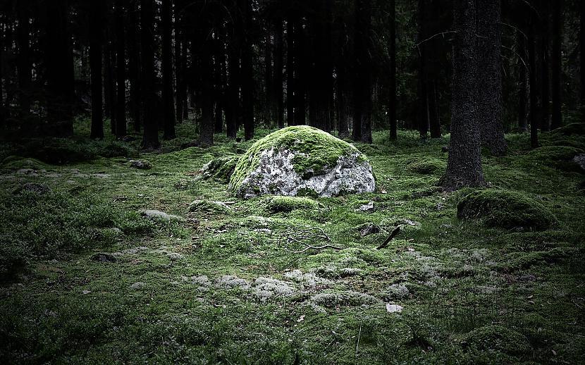 Apkārtējā mežā atrodamas... Autors: Empire States Kurzemes Draņķozols