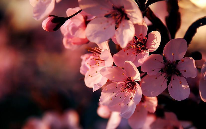 Autors: mazais28 Ziedi 10