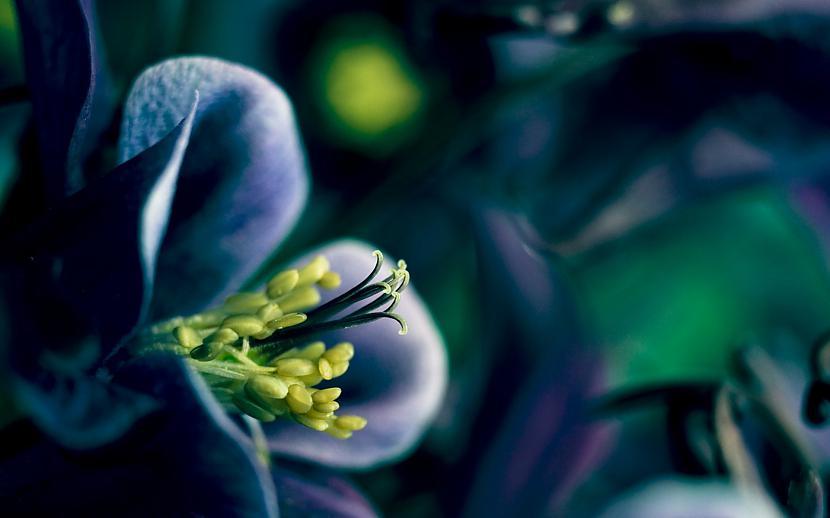 Autors: mazais28 Ziedi 11