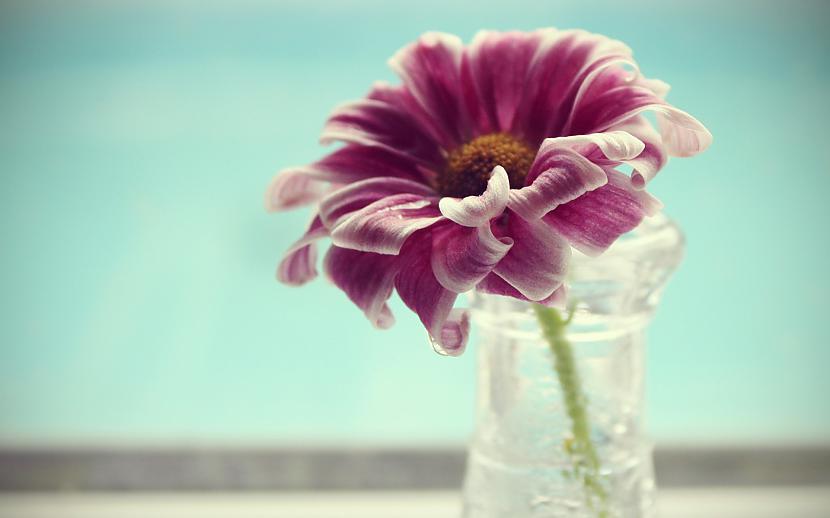 Autors: mazais28 Ziedi 14
