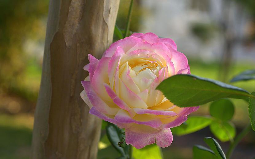 Autors: mazais28 Ziedi 15