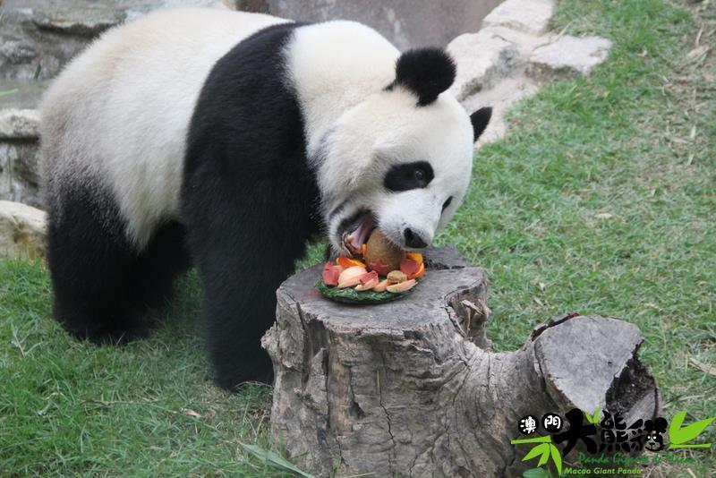 Labi laiks iet ēstCerams ka... Autors: ere222 zxzxhzc Pandas
