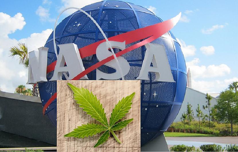 Foto PixabayDiemžēl scaronis... Autors: Lestets NASA apstiprina: marihuānā ir citplanētiešu DNS, kas nav no Saules sistēmas