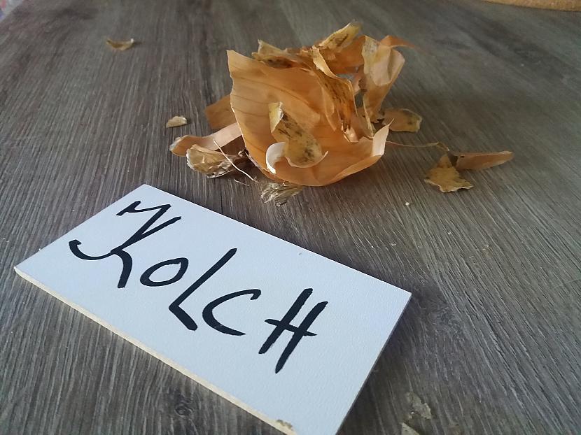 Autors: Kolch Fs Čupa