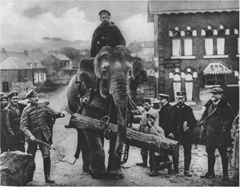 Zilonis Dženija nesot baļķi... Autors: Lestets Ziloņi 1. pasaules kara laikā
