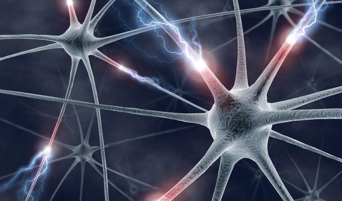 Vidēji smadzenēs ir 100... Autors: Blackbberry 16+ fakti par cilvēka ķermeni #2