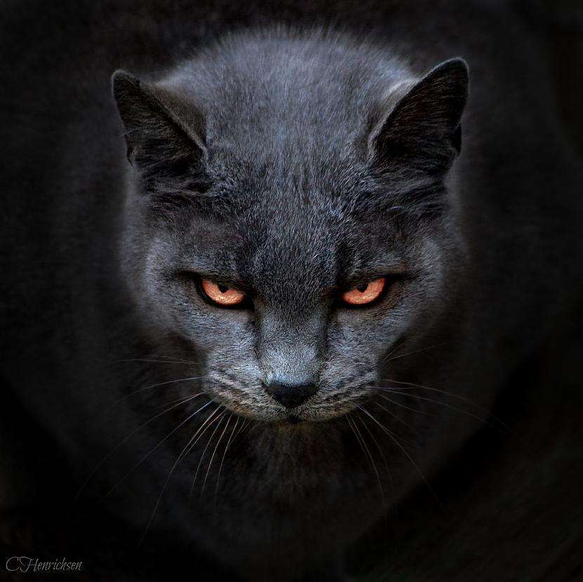 Man ļaunais kaķis atkal... Autors: Bobby Tarantino Iespējams, ka te ir FML #7