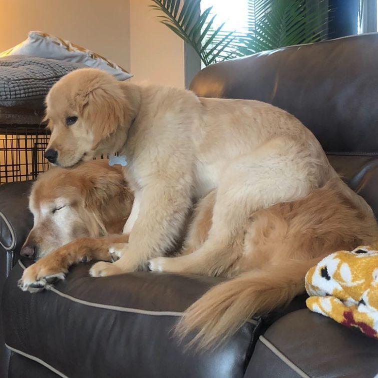 nbspLai gan suņi vieglāk... Autors: matilde Aizkustinošs stāsts par suni, kurš zaudēja acis, bet ieguva sev labāko draugu
