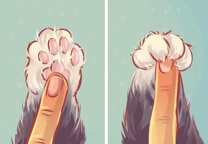 Kaķa ķepas ir vislabākā kaķa... Autors: matilde 10 tipiskas situācijas, kurās sevi var atpazīt KATRS kaķa saimnieks