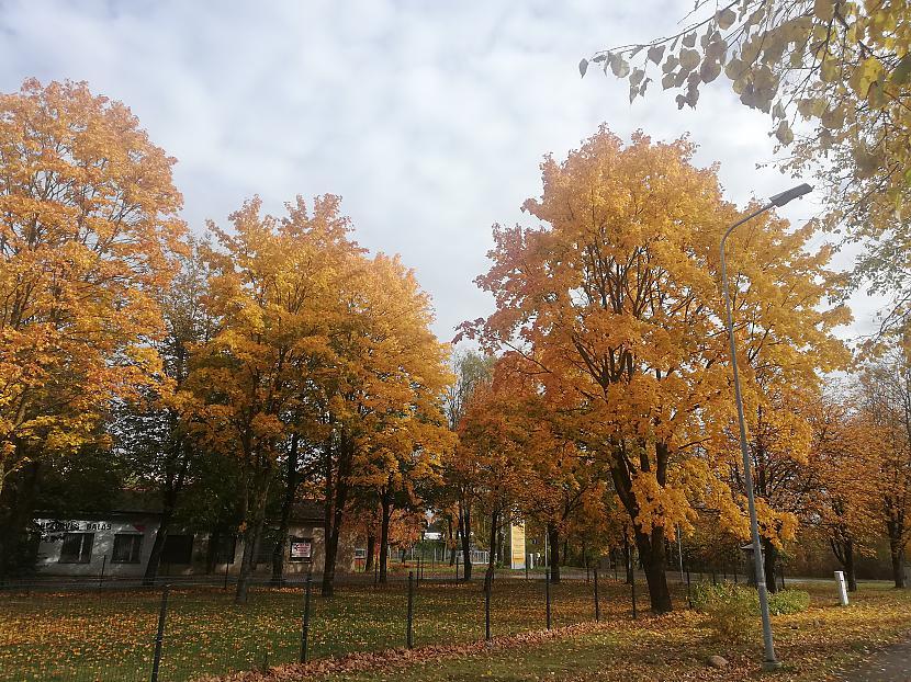 Pievienoja Latvian Revenger Autors: The Diāna Atvērtais raksts: Labākie rudens foto