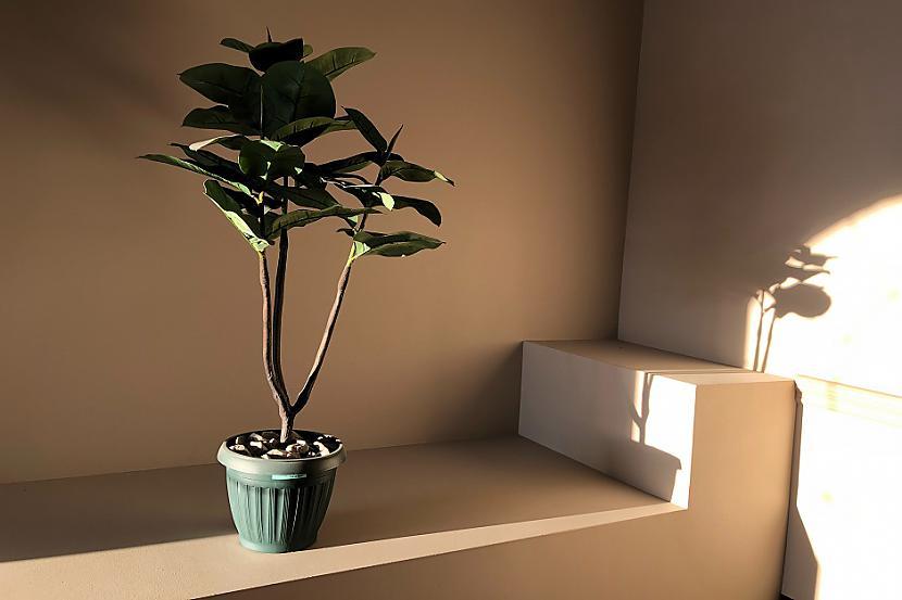 Augi podiņosScaronī ir tāda... Autors: Lestets 12 dāvanas, ko nevajadzētu dāvināt sievietēm 8. martā