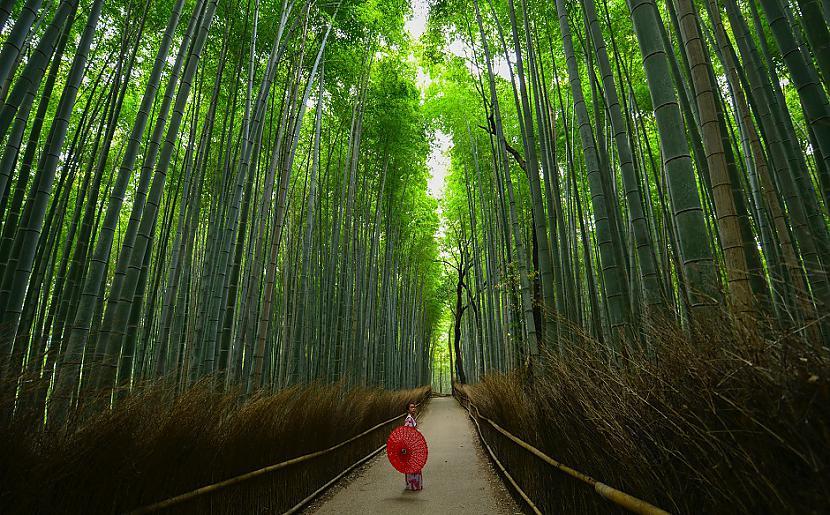 Vairāk nekā 6855 no Japānas... Autors: Lestets 10 fakti par Japānu, kas to izceļ starp citām zemēm