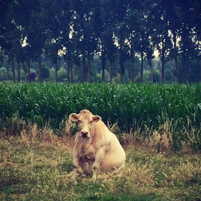 Autors: matilde Govis, kuras sēž kā suņi (21 fotogrāfija)