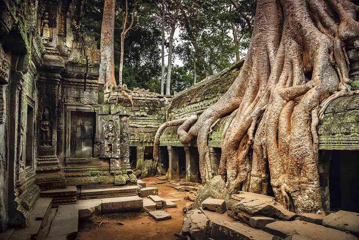 Koki Ankorvatā Kambodžā aug... Autors: Lestets Neticami, ka šīs 30 fotogrāfijas ir uzņemtas tepat uz Zemes