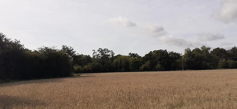 Autors: Griffith Rudens lauku takās, Malvern UK, 12/09/2020 1/2.