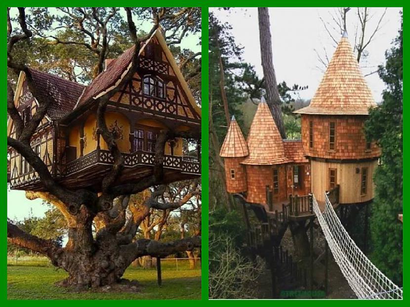 Autors: Fosilija Daudziem bērnībā bija sapnis, uzbūvēt jauku mājiņu kādā netālā kokā