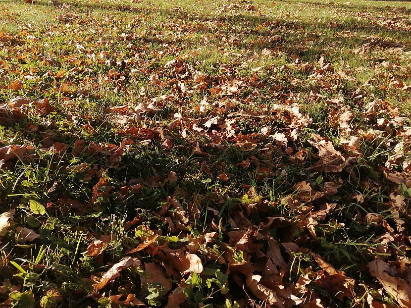 Šo jau vēl sapļausPievienoja... Autors: The Diāna Atvērtais raksts - Parādi rudens skaistumu!