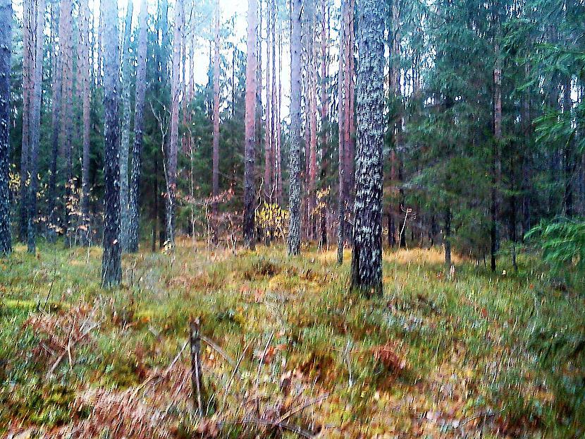 Rudens ienācis... Autors: The Diāna Atvērtais raksts - Parādi rudens skaistumu!