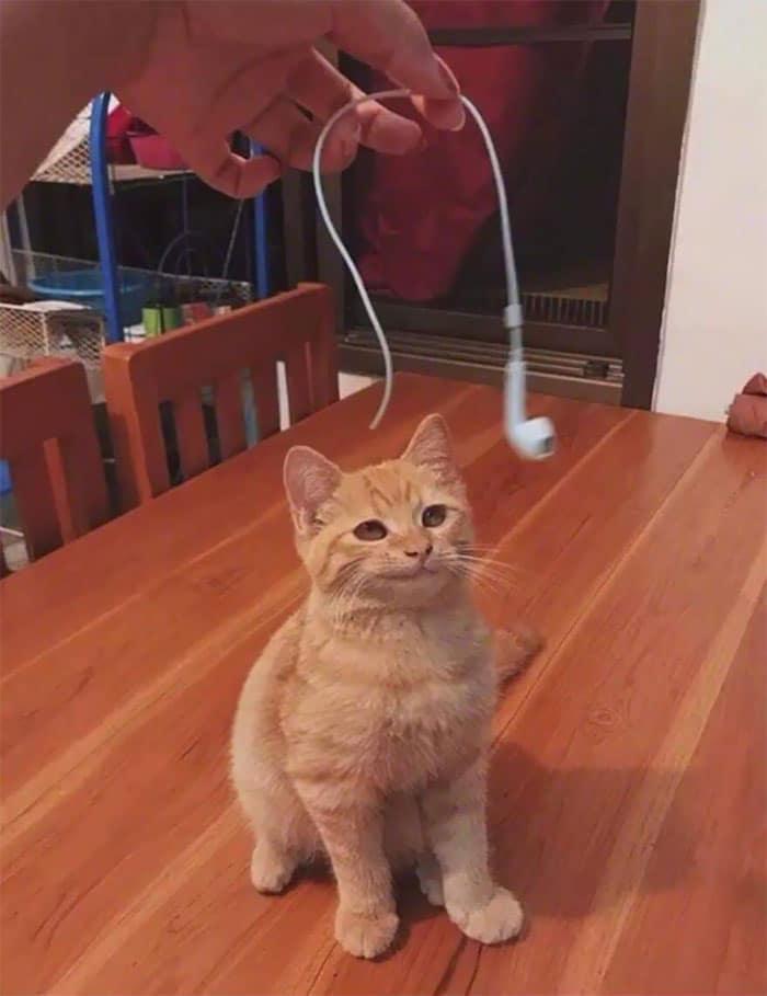 Kas nokoda manām austiņām vadu... Autors: Zibenzellis69 Vairāk nekā 10 kaķu fotogrāfijas, kas atšķiras ar sliktu izturēšanos