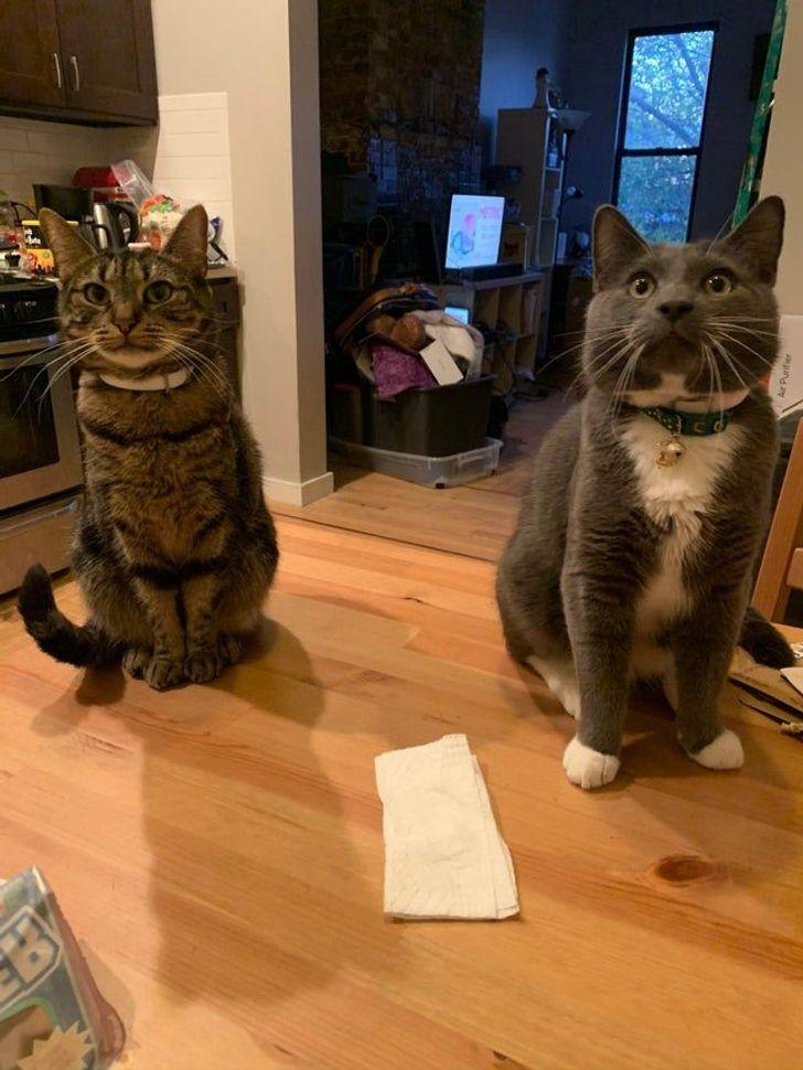 Mani kaķi scaronogad... Autors: Lestets 19 mulsinošas fotogrāfijas, kurām ir nepieciešams papildu izskaidrojums