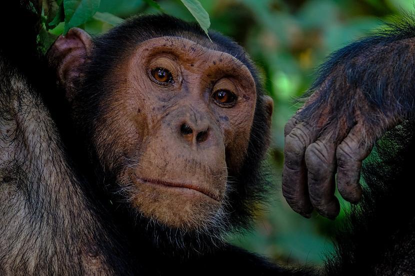 1999 gadā piecus gadus vecā... Autors: The Diāna 1999.gadā par vienu no labākajiem brokeriem Volstrītā kļuva šimpanze