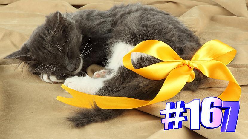Autors: kotomaniabest Smieklīgi kaķi | Jautrība ar kaķiem, katomanija #167 (video)
