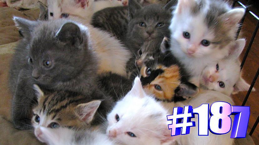 Autors: kotomaniabest Smieklīgi kaķi | Jautrība ar kaķiem, katomanija #187 (video)
