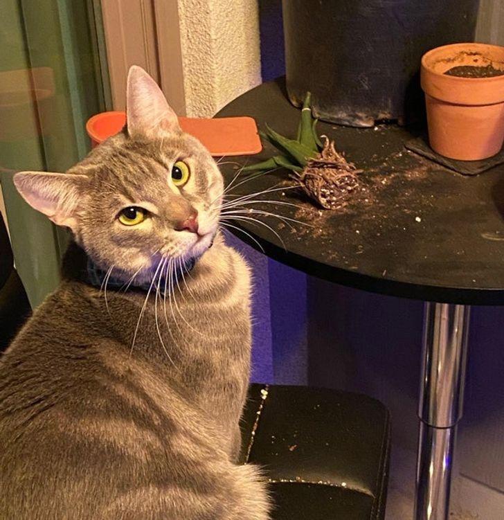 1 Mans kaķis ar 20 EUR vērtu... Autors: The Diāna 20 tvīti, kuri perfekti raksturo dzīvi kopā ar kaķi