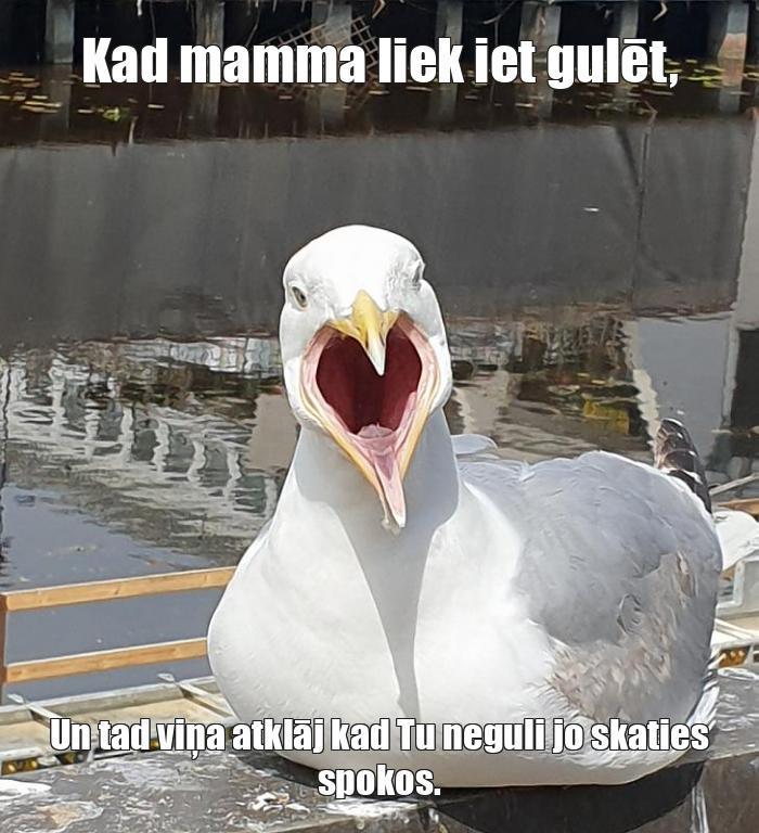 Autors: Ser_catdog Memes