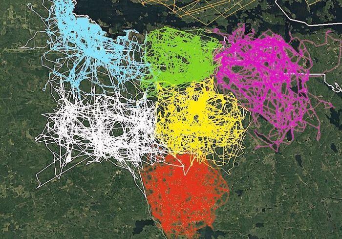 Sescaronu dažādu vilku baru... Autors: Lestets 20 neparastas kartes, kas var mainīt perspektīvu