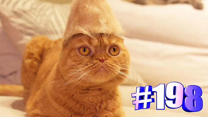 Autors: kotomaniabest Smieklīgi kaķi   Jautrība ar kaķiem, katomanija #198 (video)