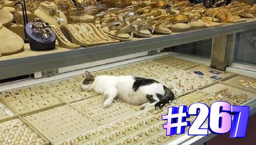Autors: kotomaniabest Smieklīgi kaķi | Jautrība ar kaķiem, katomanija #267 (video)