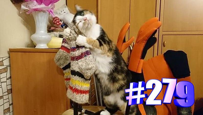 Autors: kotomaniabest Smieklīgi kaķi | Jautrība ar kaķiem, katomanija #279 (video)
