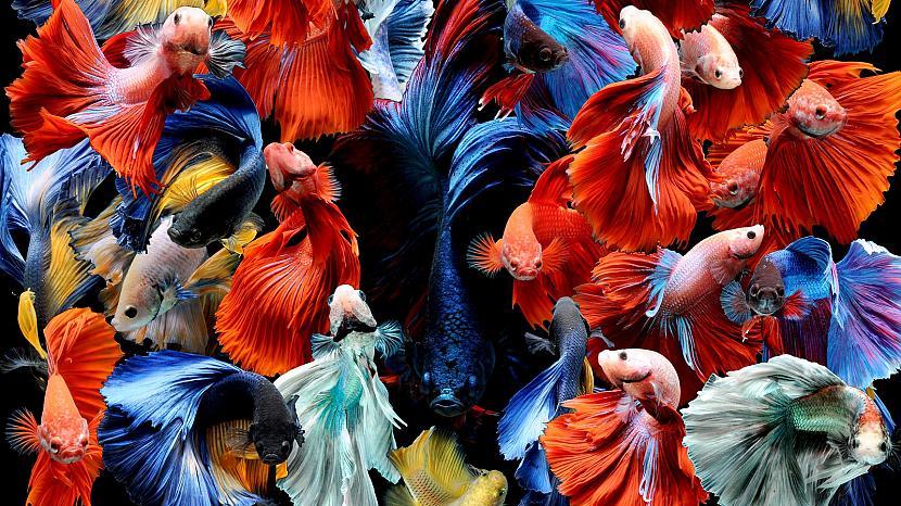 Autors: Alise Logina zivis!