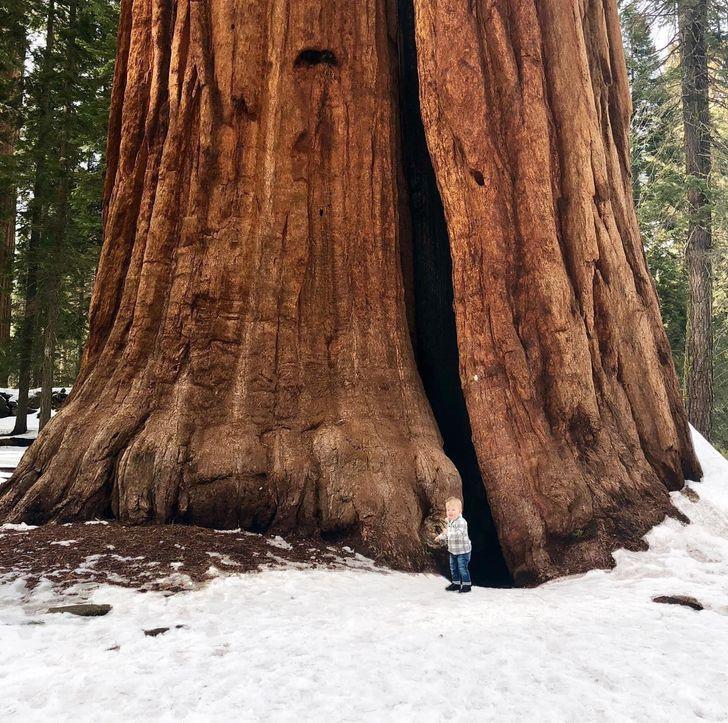 Mazs zēns stāv pie milzīgas... Autors: Zibenzellis69 13 pārsteidzošas fotogrāfijas no ikdienas
